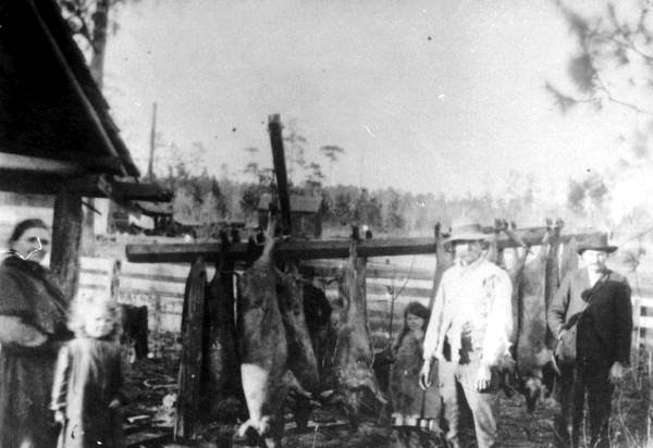 Hog Killing, Madison, Florida, 1904, Courtesy of The Florida State Archives, Florida memory project
