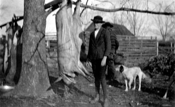 Farmers slaughtering hogs, Monticello, Florida, circa 1930, Courtesy of the Florida State Archives, Florida memory Project.