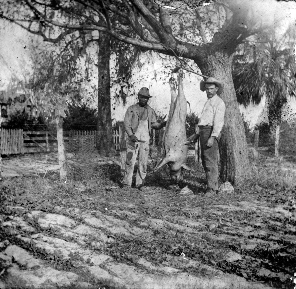 Henry White and John Leland (Jack) Hare butcher a hog, 1913, Courtesy of State Archives of Florida, Florida Memory