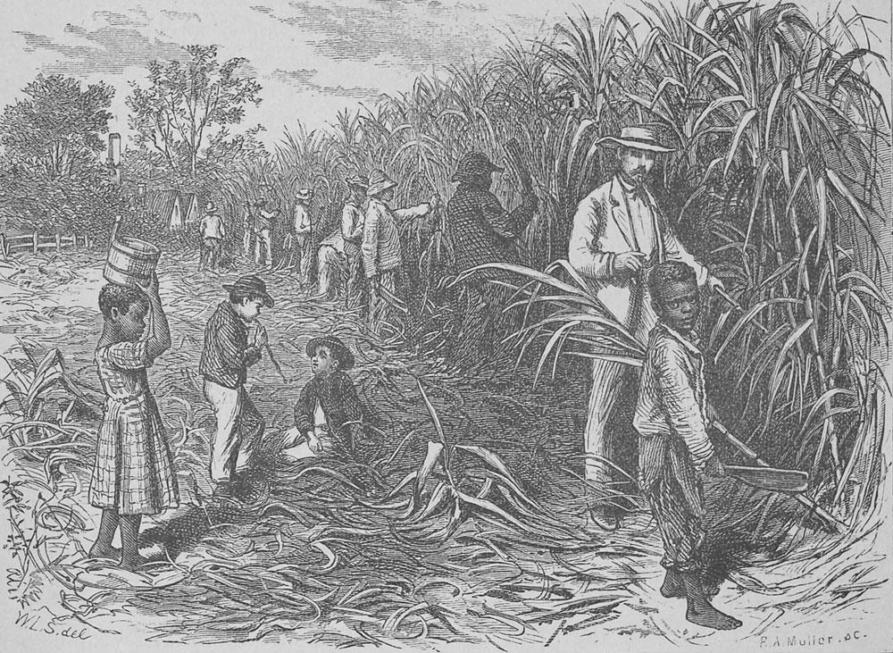 Sugar Plantation, Louisiana, 1873-74, Courtesy of the University of Virginia Library.