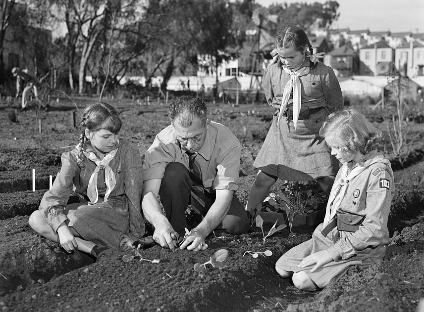 San Francisco Junior College Professor Harry Nelson, his daughter, and one of her friends, Planting in a victory garden, 1943, Courtesy of the Library of Congress