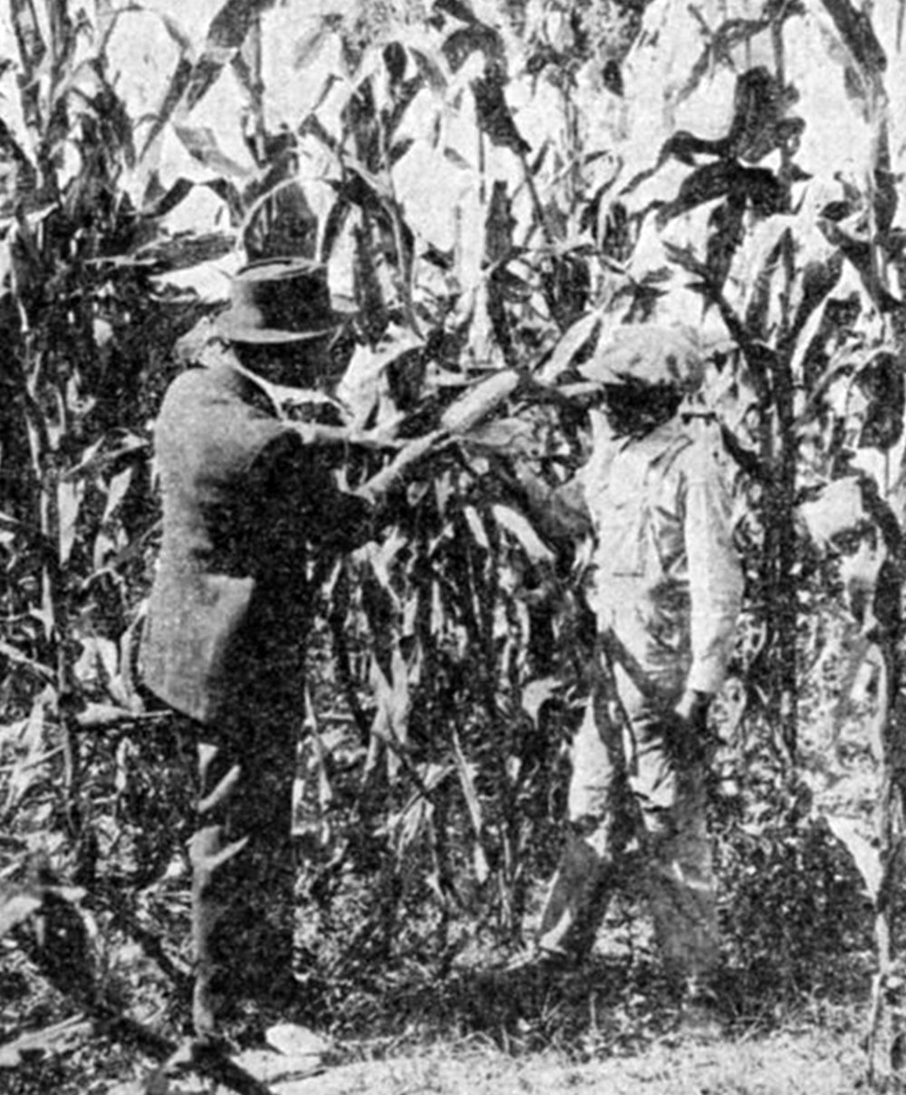 County Agent teaching Corn Selection, circa 1900, Courtesy of the New York Public Library