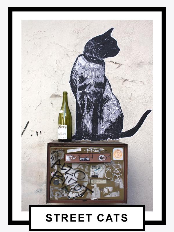 album street cat.jpg
