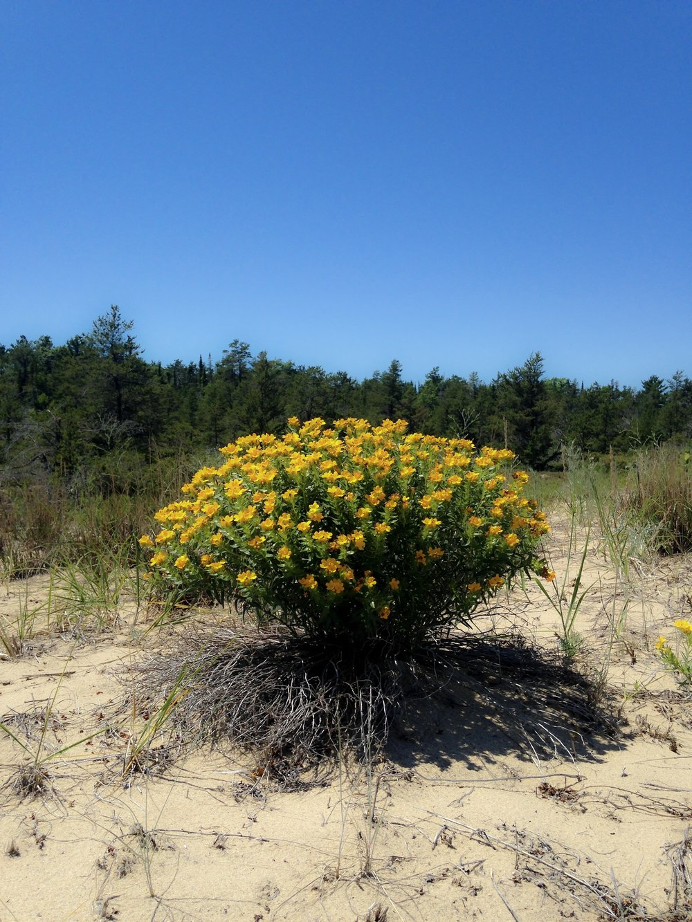 yellow beach bloomz.jpg