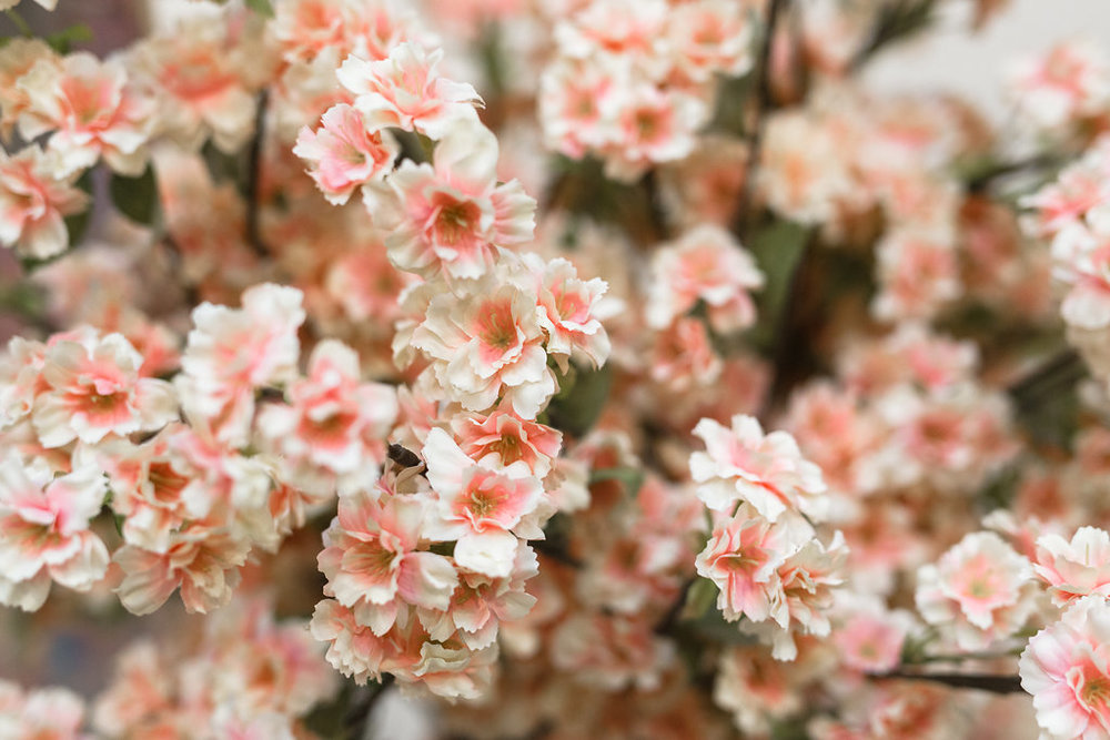 blossom-231.jpg