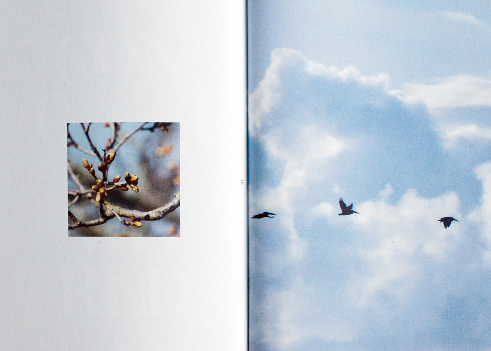 fig. 4. Nature photography: tree branch and pelicans in flight