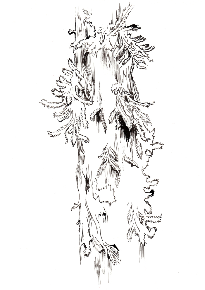 fig. 5. Mossy tree ink sketch