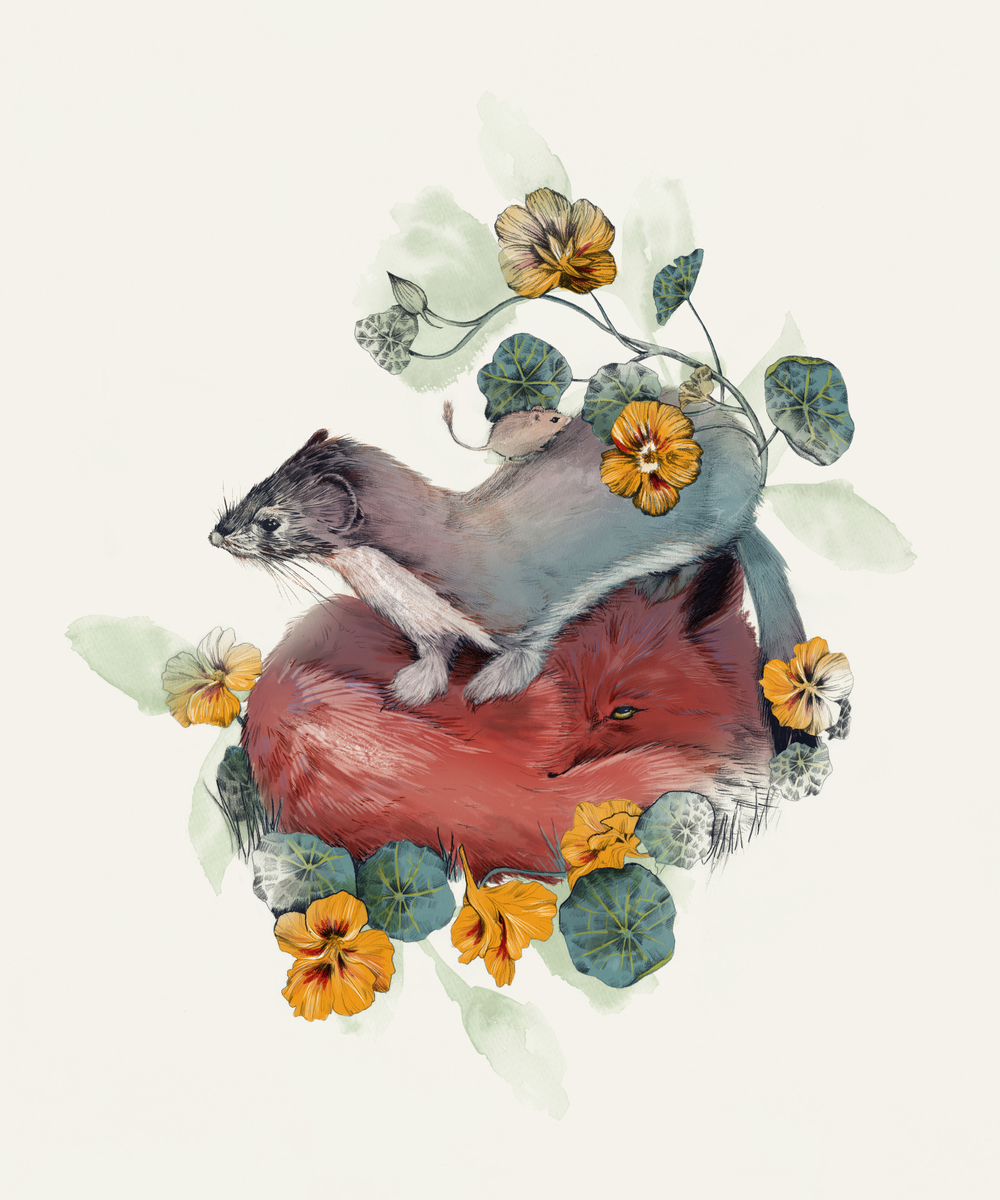 fig. 1. Stoat & Fox and a tiny mouse