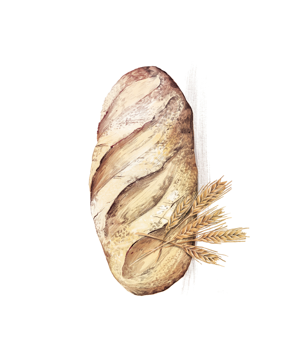 fig. 2.  Bread and wheat illustration