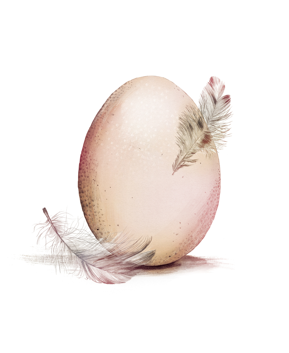 fig. 3. Egg and feather illustration