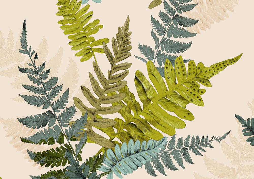 Fig. 2. Details of fern leaf drawings