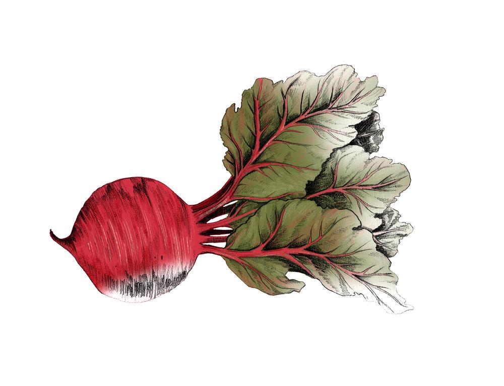 fig. 2. Beet drawing