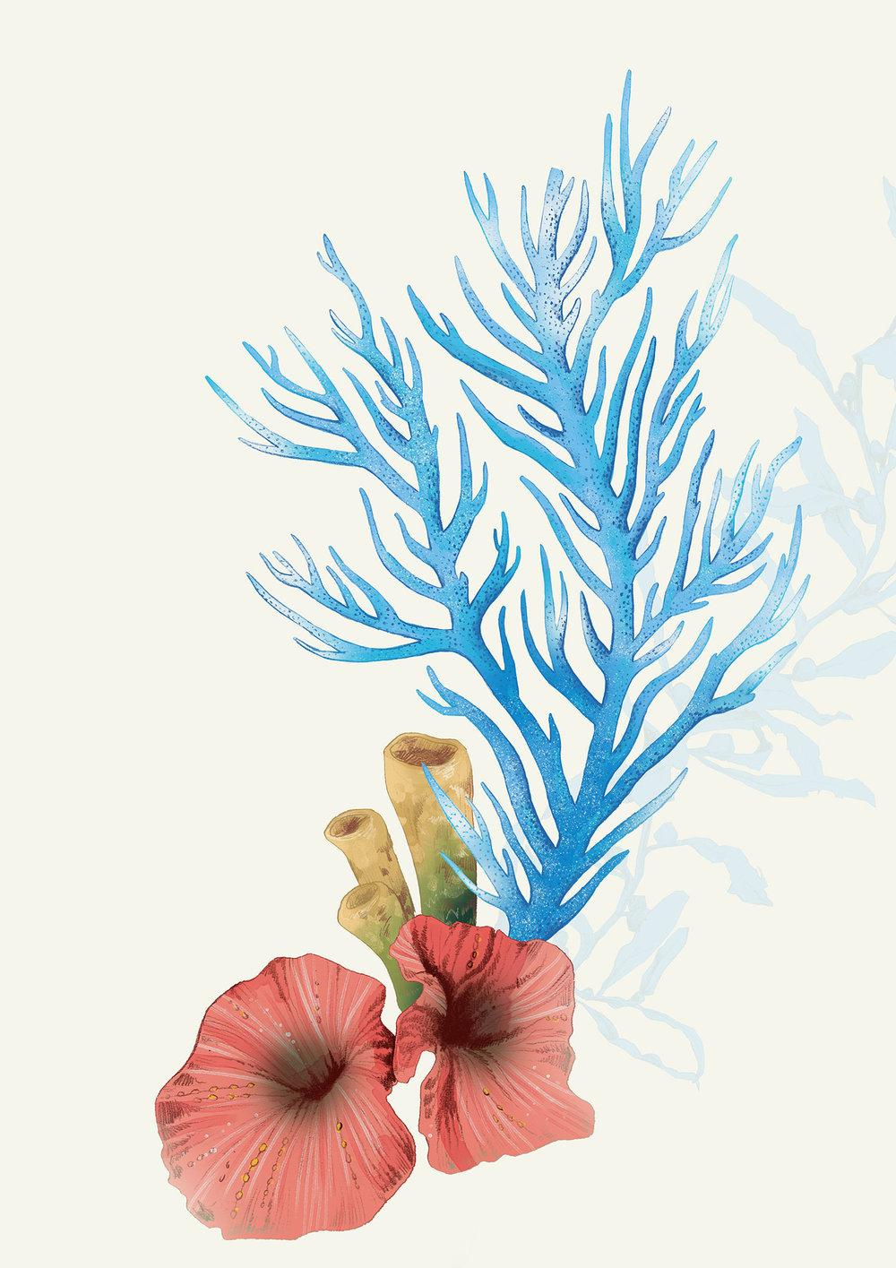 fig. 9. Corals element illustrations