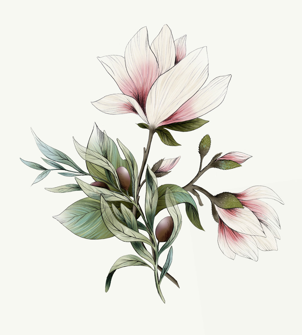 frg .1. Botanical illustration, magnolia and olive branch