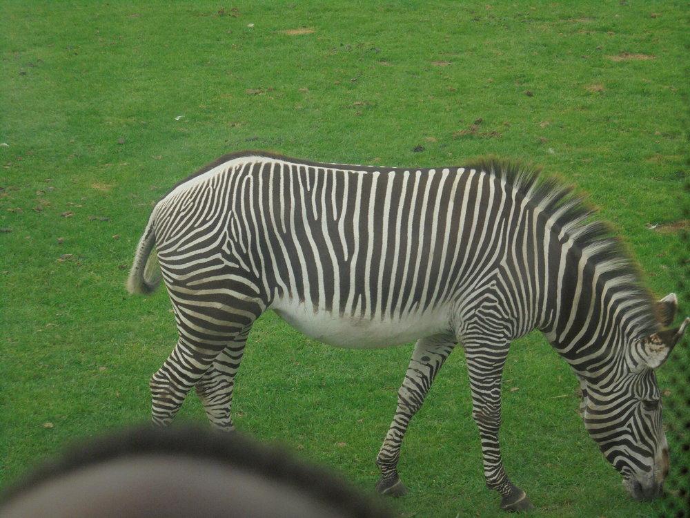 Safari Park 4.JPG