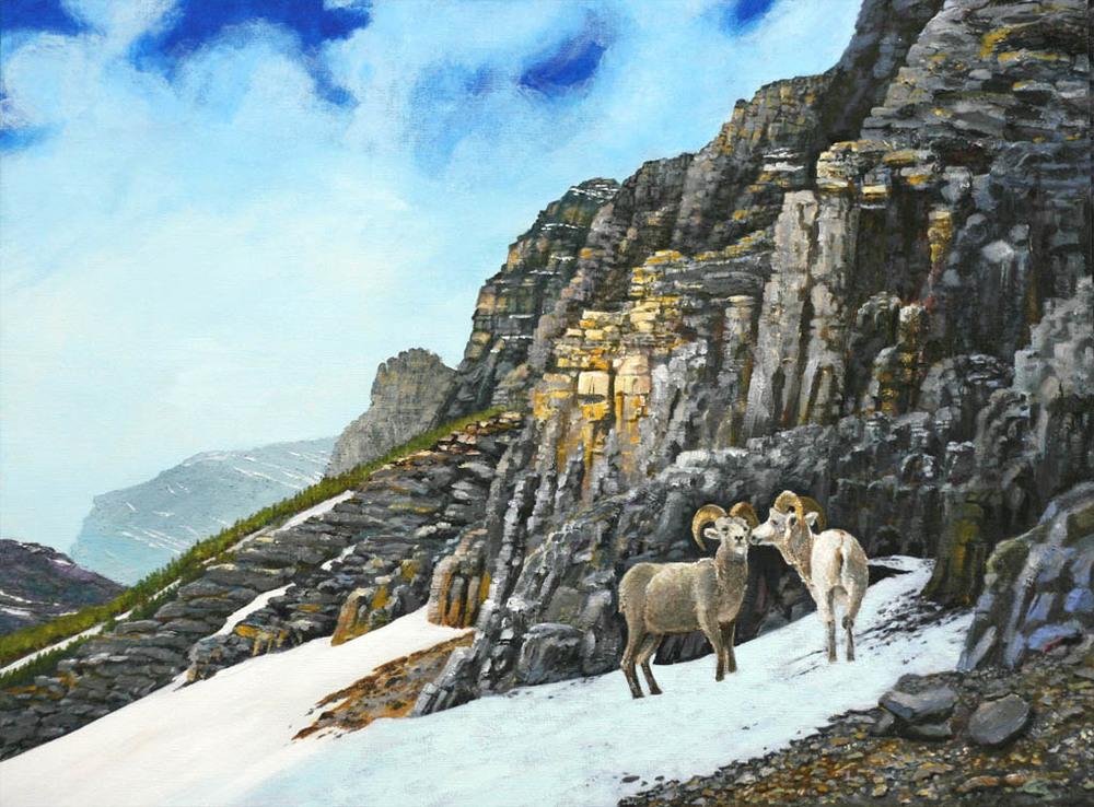 Dalle Sheep Glacier National Park.jpg