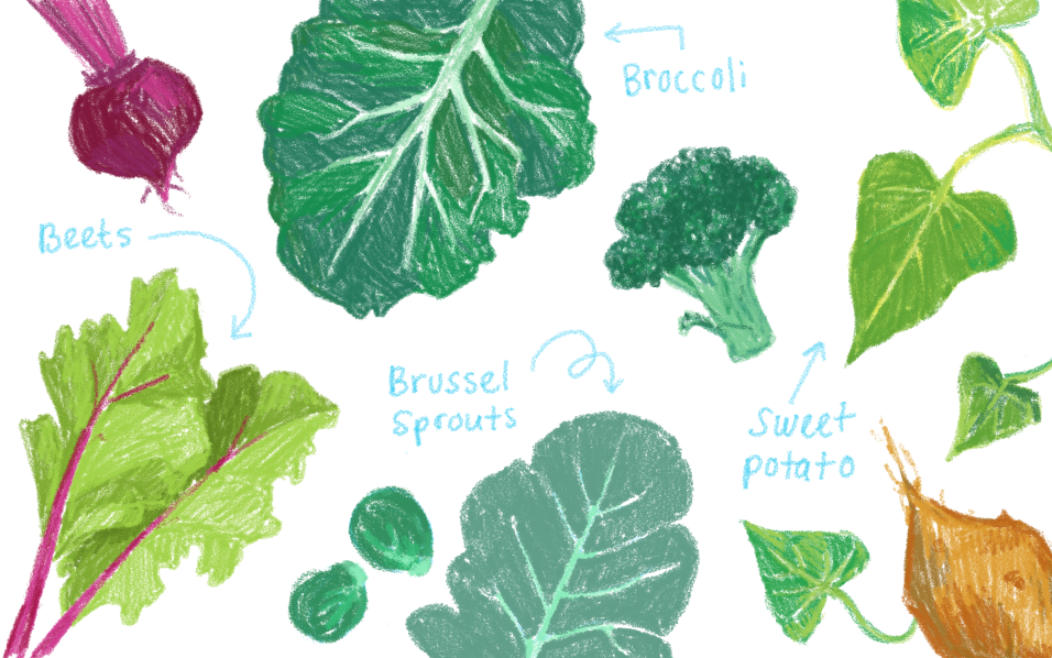 illustration about the greens (leaves) of vegetable that ultimately ended up not being used.