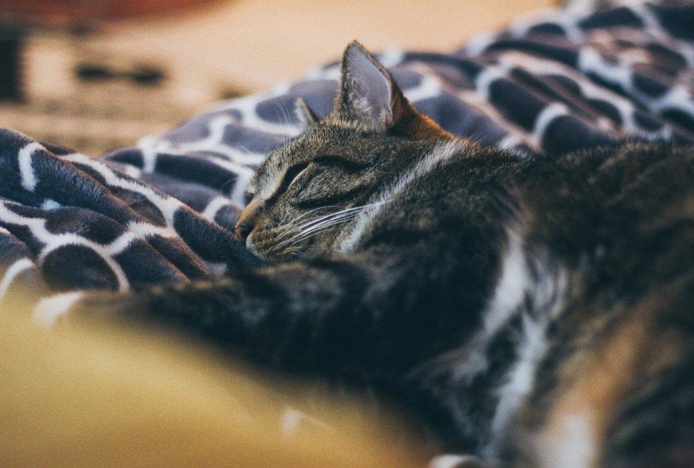 Cats_Tubbo-8775.jpg