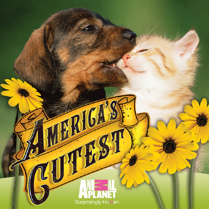 130570_Americas_Cutest_CoverArt_800x800_8.jpg