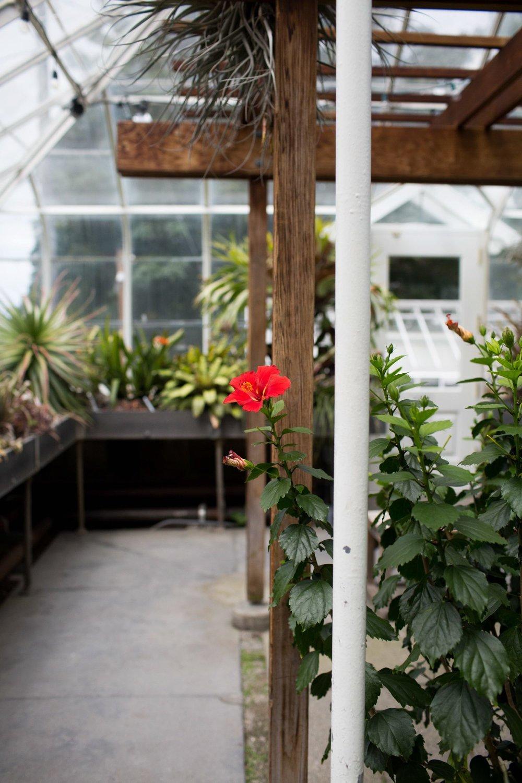 Image taken at Volunterr Park Conservatory.