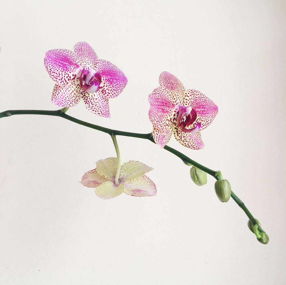 07 /  My orchid for round three