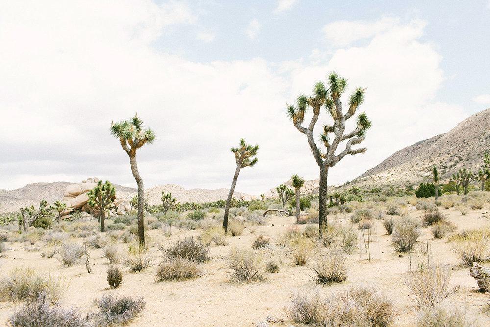 You've Got Flair | Travel | Joshua Tree | 045.jpg