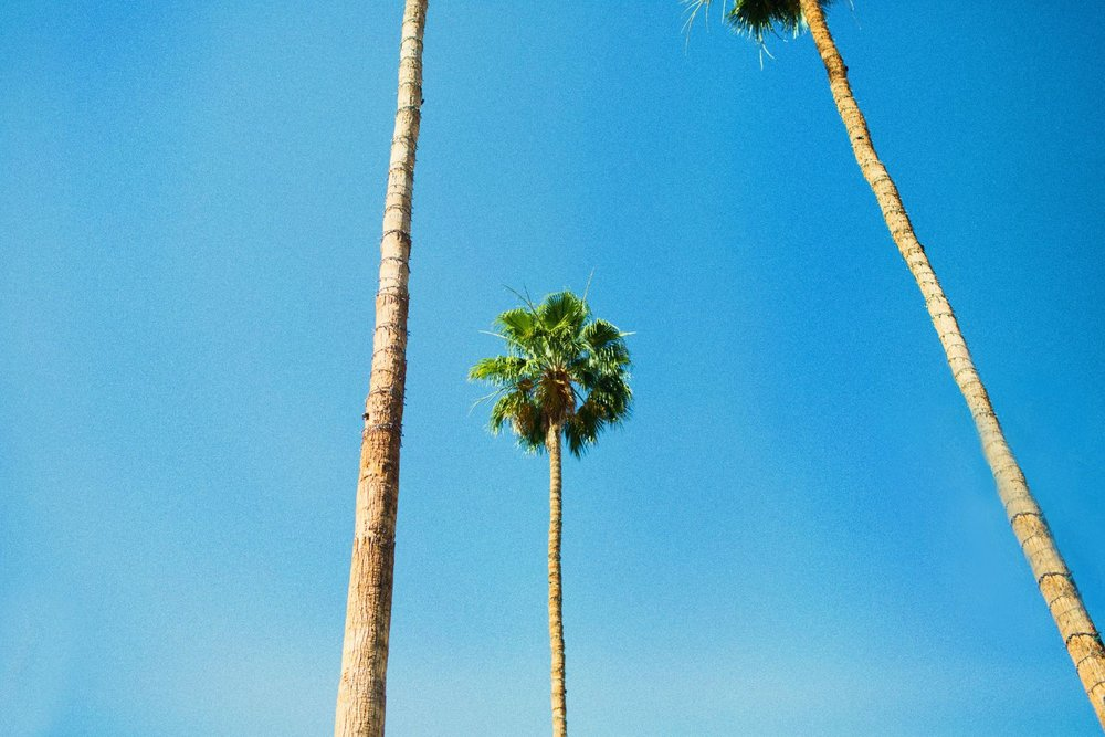 The Parker Palm, Palm Springs | You've Got Flair