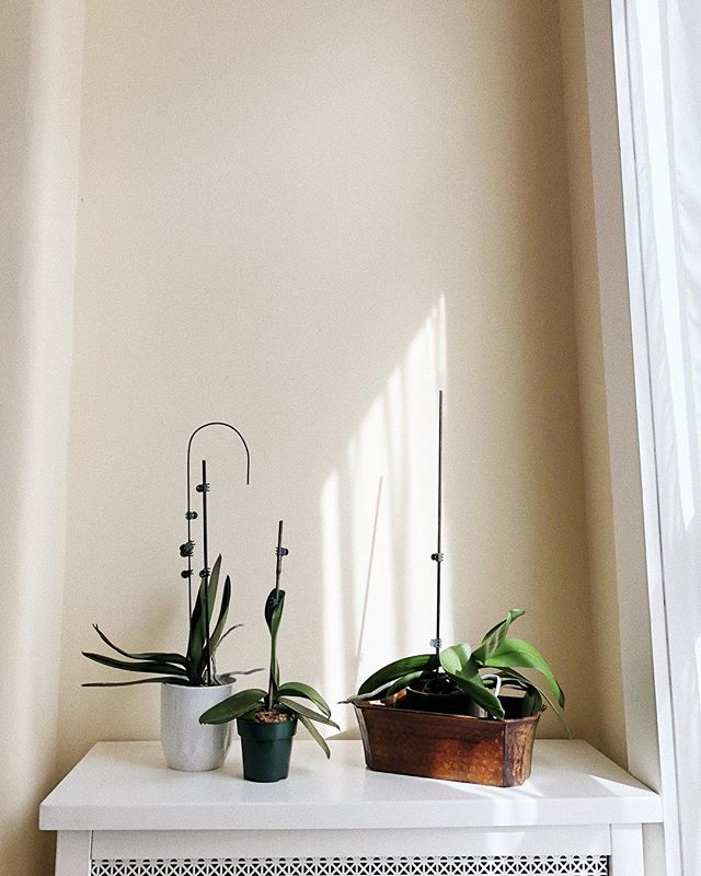 Onto another season of patiently waiting for my orchids to bloom.
