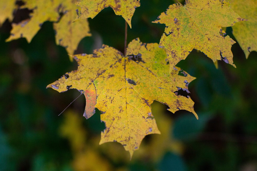 Week 45: Fall/Autumn