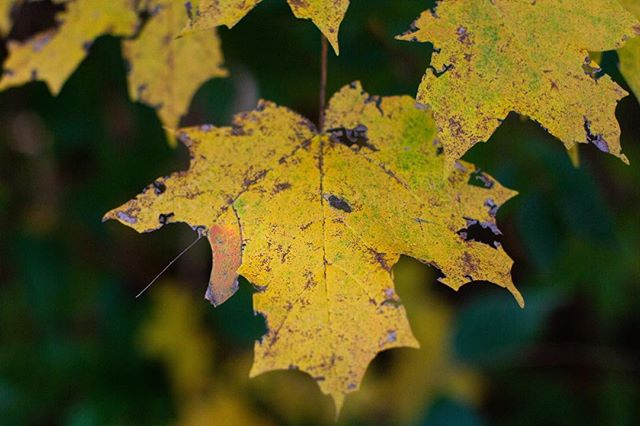 The first week of November in KY has to be my favorite week of the entire year. This year was no exception. Lots of pretty fall leaves over on my blog today for this week's #2018p52 prompt, fall.