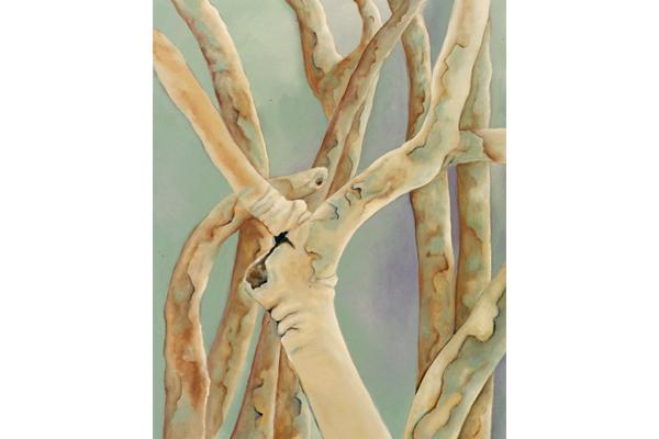 Eucalyptus Trees II
