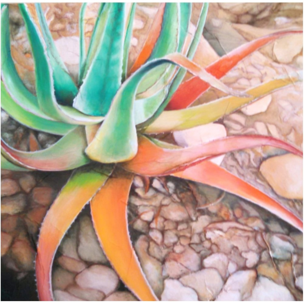 GREEN AND ORANGE AGAVE.jpg