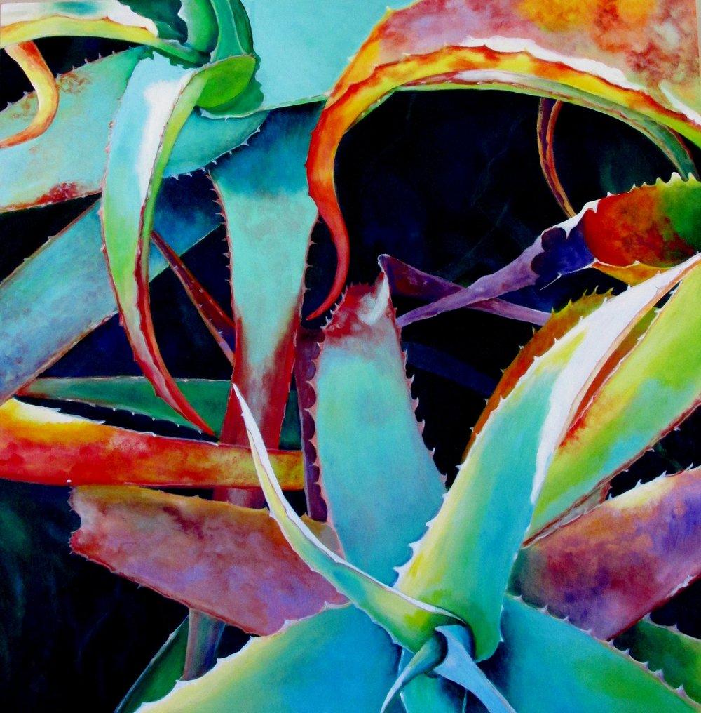 Colorful Aloe