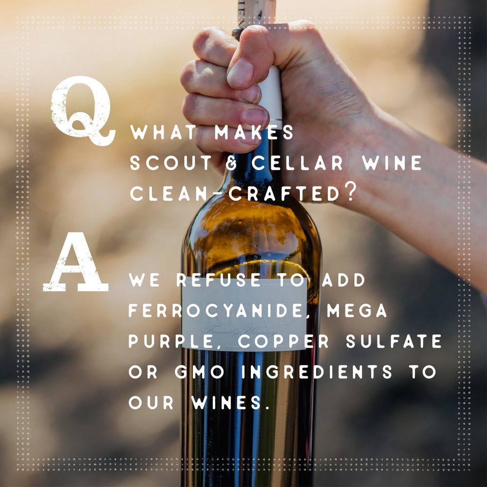 Scout & Cellar - Clean-crafted wine