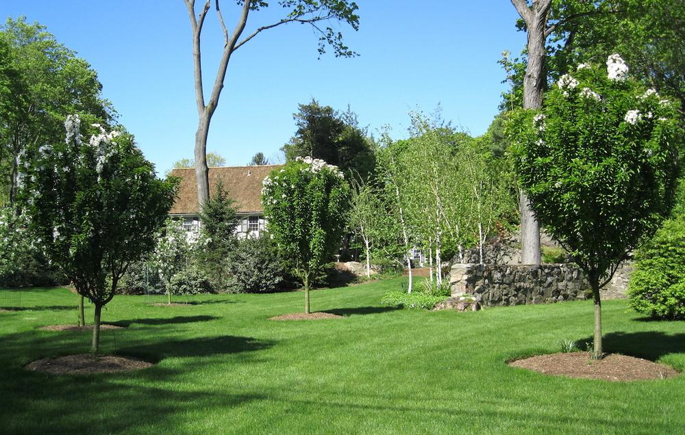 tree-plantings.JPG