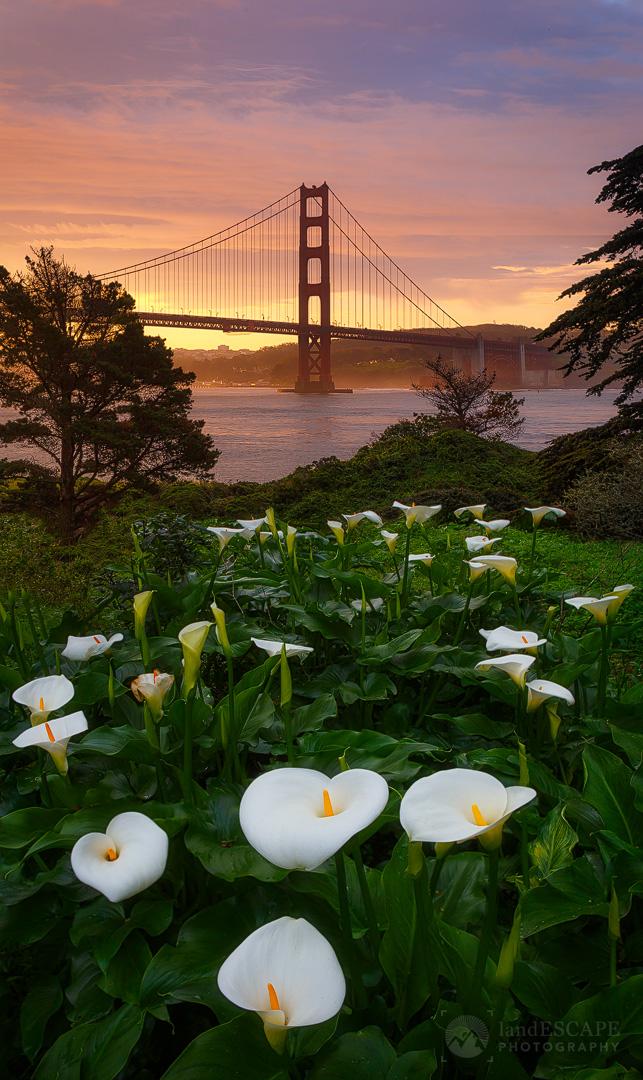 Callafornia Sunrise