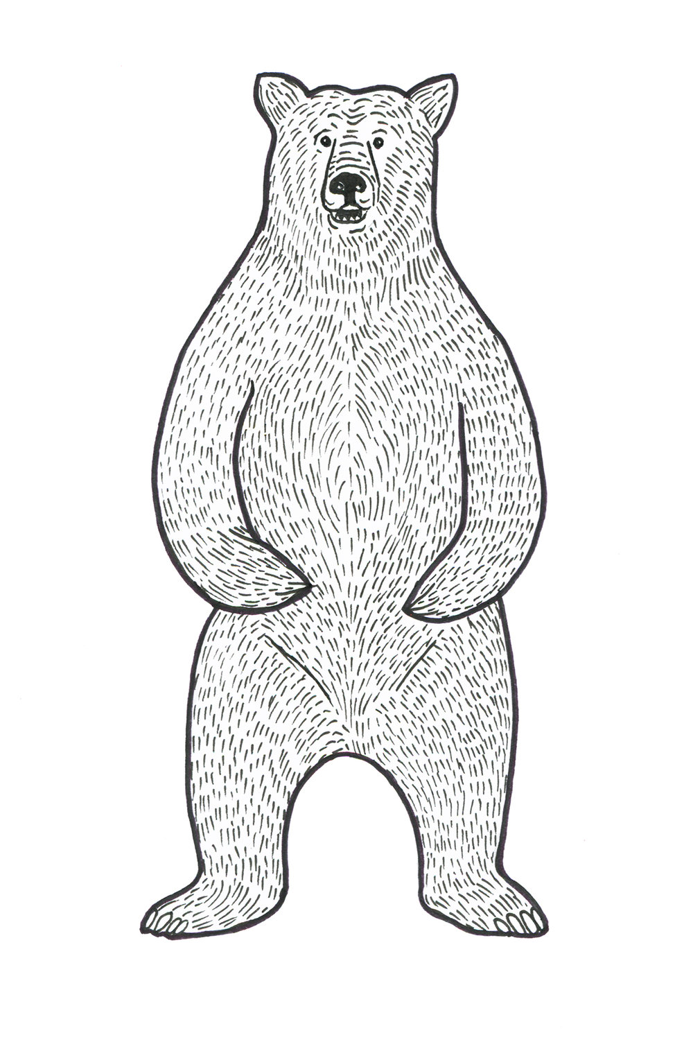 web-bear-illustration.jpg