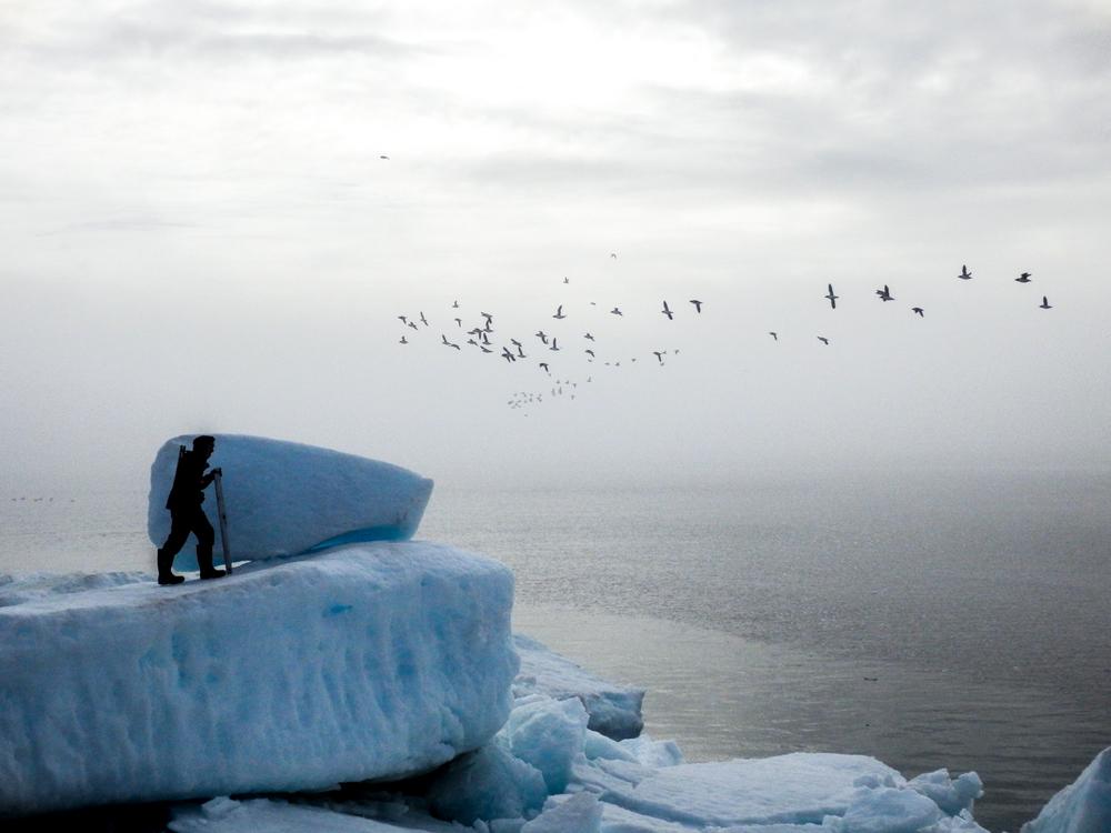 Tony Lee - Prince Leopold Island, Nunavut