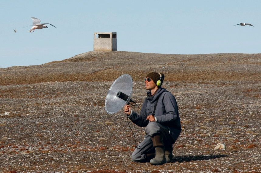 Mark Maftei has been studying birds in the Arctic since 2004, and focused on avian ecology during his B.Sc. at the University of Toronto and his M.Sc. at Memorial University. His main interests include migration biology and the ecology of Arctic breeding species. He has worked all over the circumpolar Arctic, but returns to Nasaruvaalik Island each summer to continue research on the diverse community of nesting species. He is a leading expert on Ross's gulls.