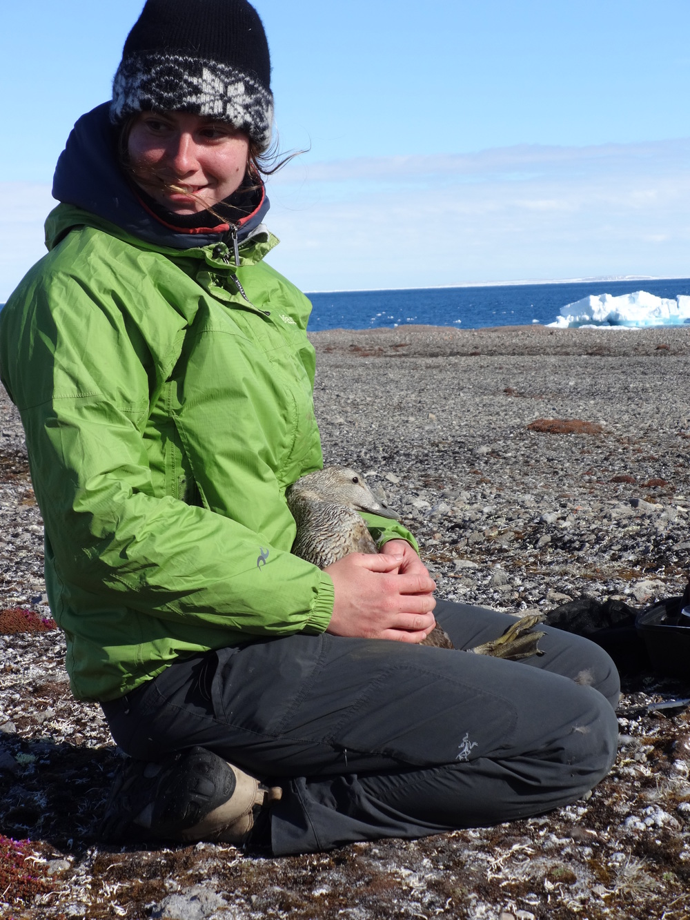 "Isabeau Pratte has spent the last three years studying birds that breed in the Arctic, especially seabirds and seaducks, notably at Nasaruvaalik Island and Prince Leopold Island. After a B.Sc. at the Université du Québec à Rimouski in 2012, she is working on an M.Sc. at Acadia University. Part of her research examines the interaction between common eiders and arctic terns that breed at Nasaruvaalik Island. ""The Arctic  is a phenomenal region, always changing, never the same... It is a great opportunity to be able work in this area"""