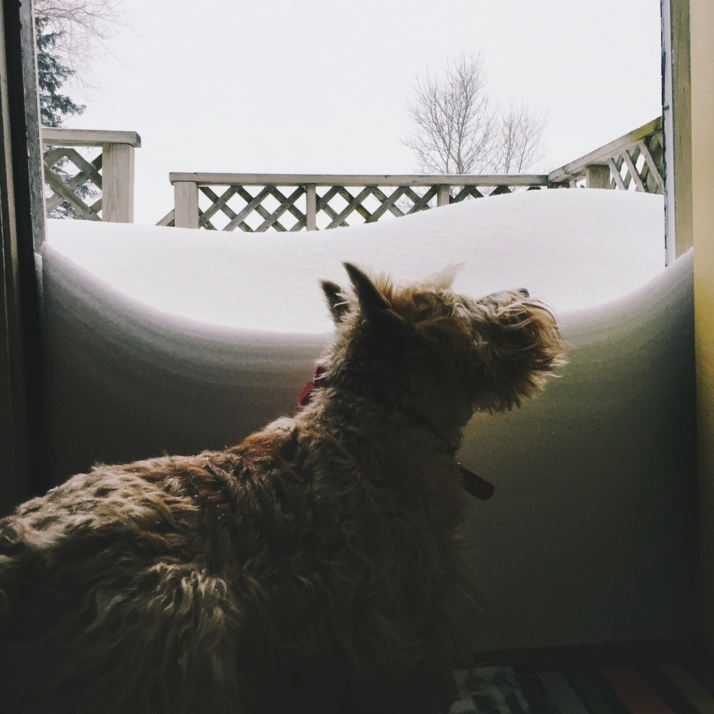 Lady Darcy of Pemberley greets storm Juno at our door