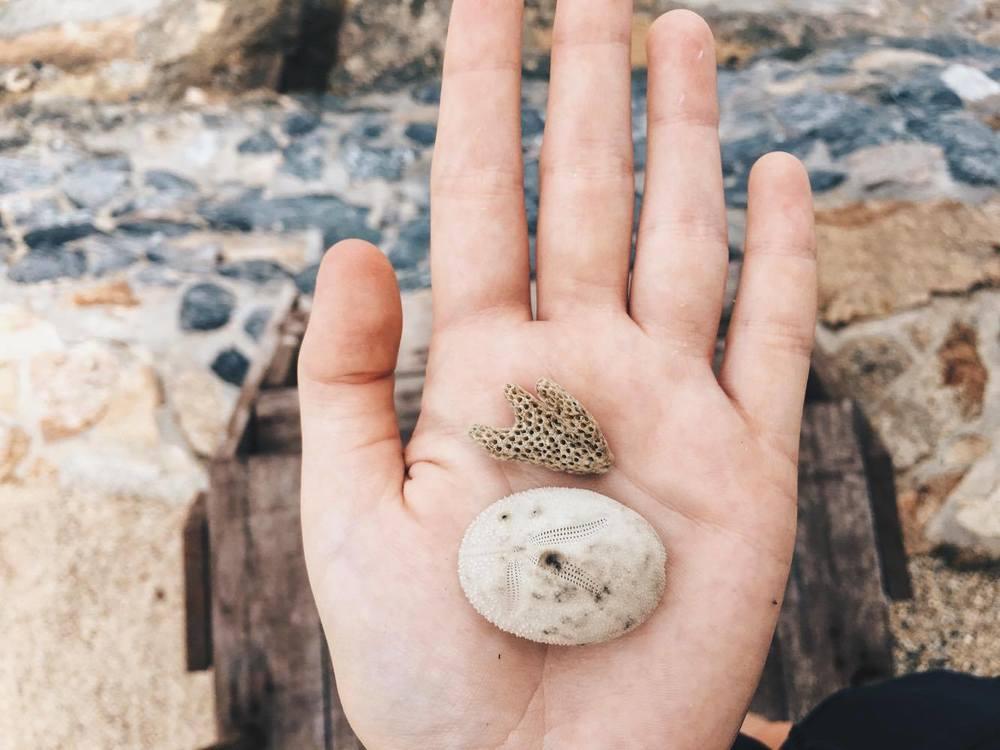 Sea Urchin carcass (bottom)  Echinocyamus pusillus