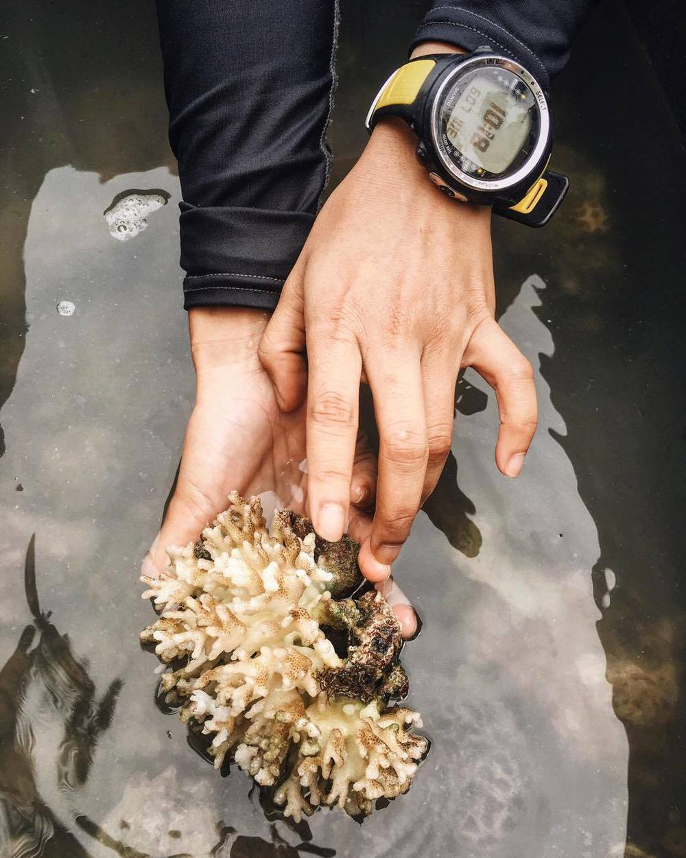 Hard Coral  Acropora nasuta