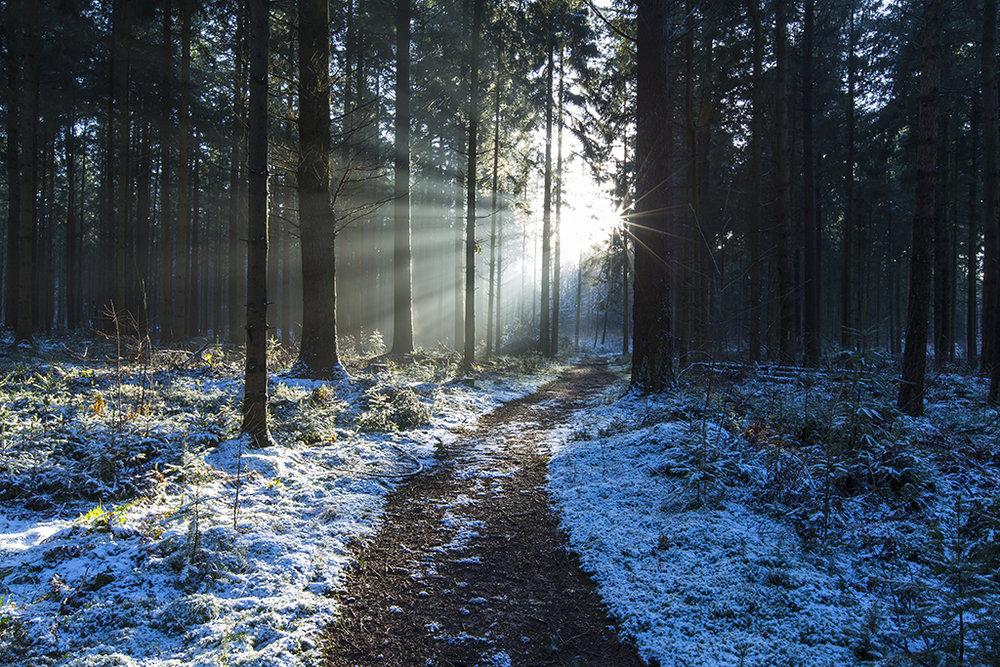 Snowy forest - Gieten.jpg