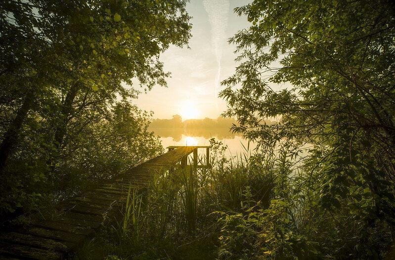 Sassenhein Pond - Groningen  Deze foto is totaal onverwacht goed gelukt. Bij zonsopkomst had ik een paar leuke foto's gemaakt en was mijn spullen alweer aan het inpakken, toen ik de zon nog mooi zag spiegelen in het water. Vrij nonchalant maakte ik nog even snel een foto, wat later bleek de mooiste van die ochtend.