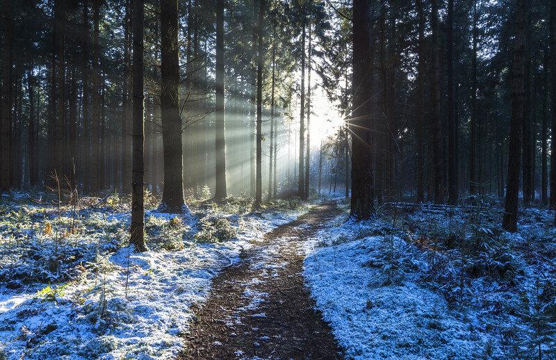 Gieten - Drenthe [❍] ⇢ 5DMIII - 27 mm - F16 - 0.6 sec - ISO 50 - No filter  Onderweg naar een zonsondergang locatie. Zag ik plotseling het licht heel mooi door de bomen schijnen. Ik bedacht mij geen moment en pakte mijn camera om deze foto te maken. De zonsondergang locatie waar ik naar onderweg was viel achteraf tegen.