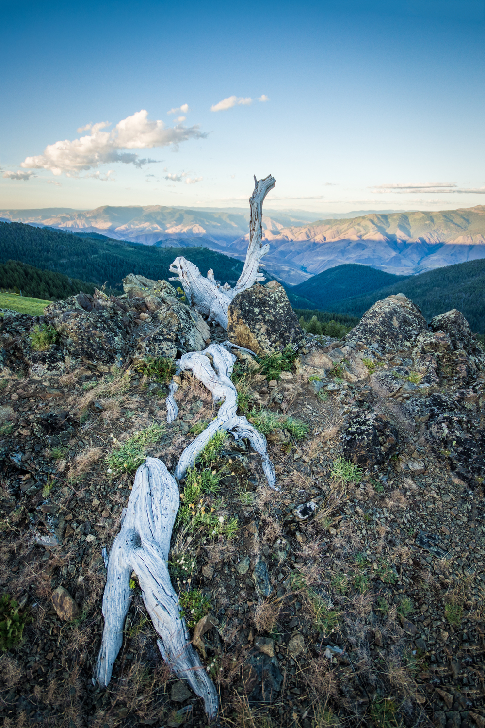 Dead Tree Overlook