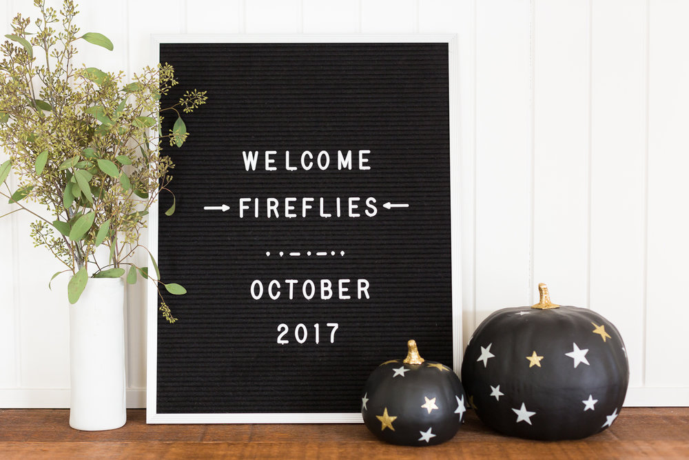 Firefly2017-1.jpg