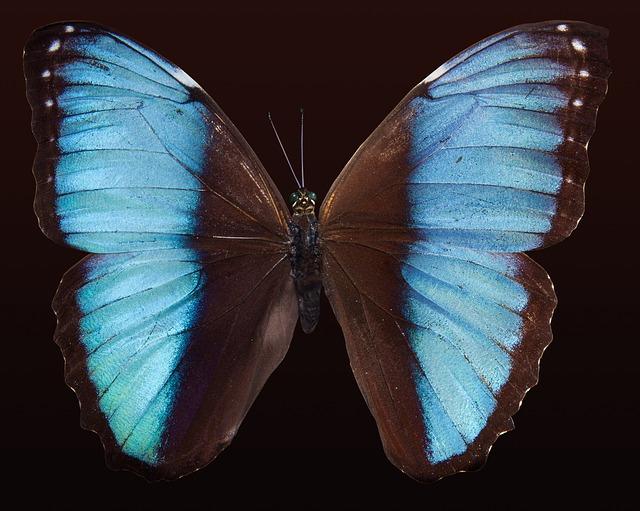 butterfly-176133_640