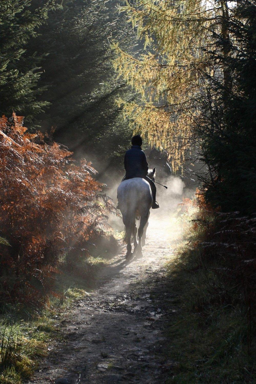 Recorridos a caballo - Orgánico Hotel Bputique